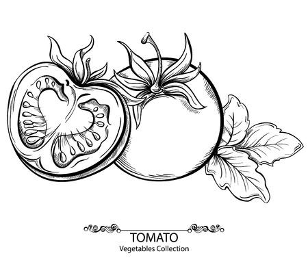 ロゴベクトルの手が白い背景に分離されたトマトのイラストを描きます。野菜のコレクション