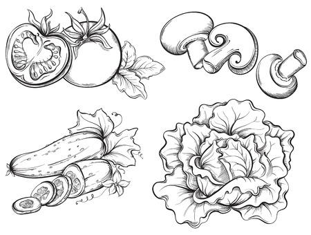 Dibujados a mano Vehículos Fijados. Tomate, pepino, champiñones, col aislada en el fondo blanco. Ilustración vectorial