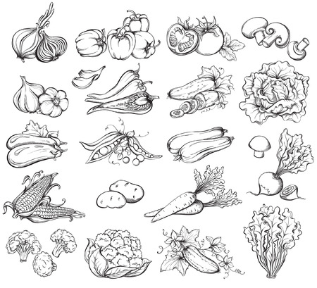 food illustration: Hand Drawn Vegetables Set.  Collection of  Vegetables sketch. Vector illustration Illustration