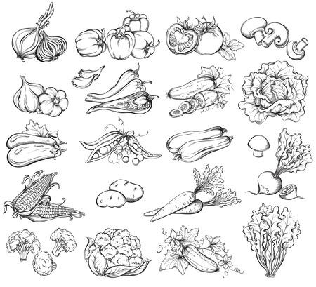 marchew: Ręcznie rysowane zestaw warzyw. Zbiór warzyw szkicu. Ilustracji wektorowych