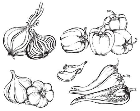 손으로 그린 야채 설정합니다. 향신료의 컬렉션 : 파프리카, 칠리 고추, 마늘, 흰색 배경에 고립 된 양파. 벡터 일러스트 레이 션