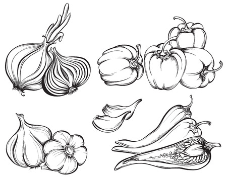 Hand Drawn Verdure Set. Raccolta di spezie: paprika, peperoncino, aglio, cipolla isolato su sfondo bianco. Illustrazione vettoriale