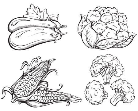 corn: Hand Drawn Vegetables Set. Сorn, cauliflower, broccoli, eggplant isolated on white background. Vector illustration
