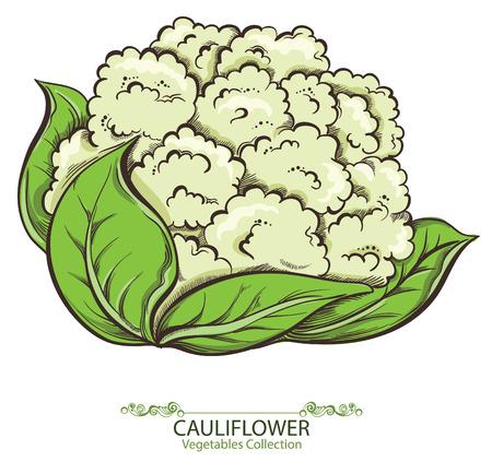 coliflor: ?auliflower. Drenados mano del vector verduras aislados sobre fondo blanco