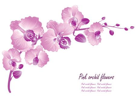 orchidee: Fiore di orchidea. Illustrazione vettoriale Vettoriali