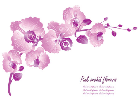 branch isolated: Flower orchid. Vector illustration Illustration