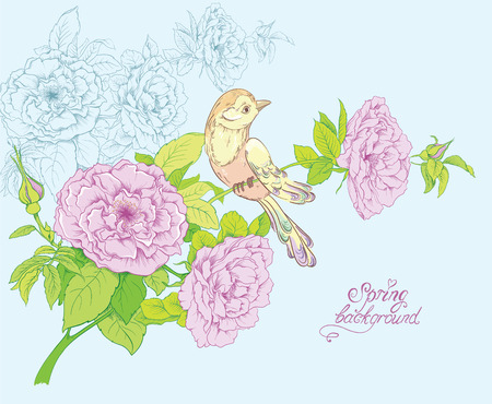 hand drawn rose: Hand drawn Bird and blooming roses Flowers. Vector illustration of floral background. Illustration