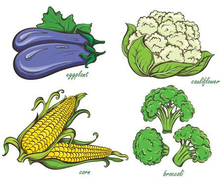 Hand Drawn Vegetables Set. Corn, cauliflower, broccoli, eggplant isolated on white background. Vector illustration Vector