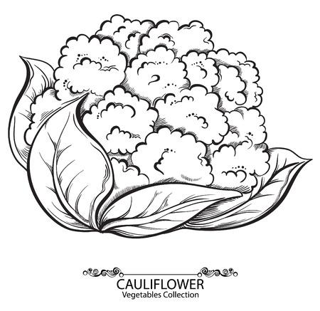 ? auliflower。白い背景に分離されたベクトル手描き野菜