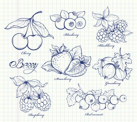 grosella: Iconos fijados de bayas dibujados a mano en estilo retro. Imagen Esquema en la página del cuaderno de antecedentes. Ilustración vectorial Doodle. Plantilla de diseño