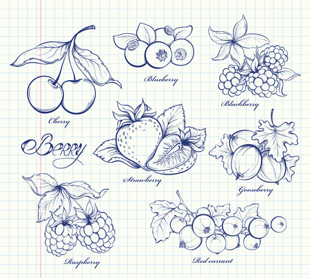 strawberry: Icons set of hand drawn berries in retro style. Outline image on notebook page background. Doodle vector illustration. Design template