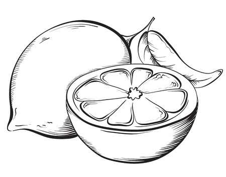 Lemon. Hand drawn fruit. Sketch Vector illustration  イラスト・ベクター素材