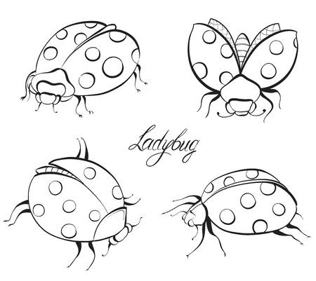 lady beetle: Sketch of Ladybugs. Hand drawn vector illustration. Illustration
