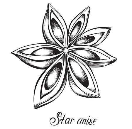 Anice stellato. erbe aromatiche e spezie. Mano illustrazione vettoriale disegnato Vettoriali