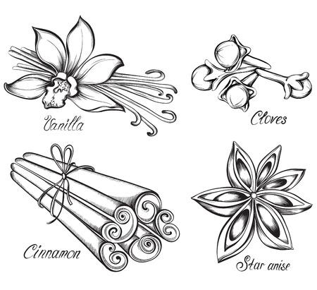 vainilla flor: Conjunto de especias de la cocina. Vainilla, canela, clavo de olor, anís estrellado. Dibujado a mano ilustración vectorial.