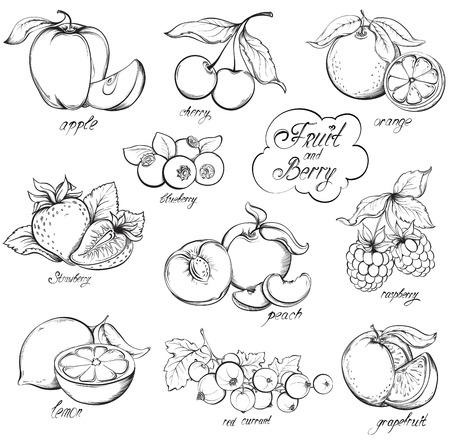 Colección de frutas y bayas, dibujados a mano aislado sobre fondo blanco. Vector la ilustración del estilo del bosquejo de la vendimia. Ilustración de vector