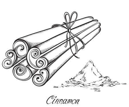 cinnamon sticks: Cinnamon sticks and powder isolated on the white background. Kitchen herbs and spices. Hand drawn vector illustration Illustration