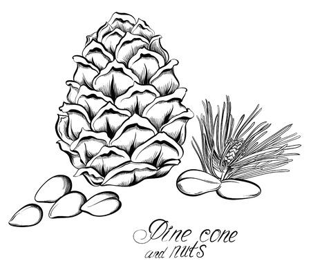 fondo blanco y negro: piñones y piñas. Dibujado a mano ilustración vectorial.