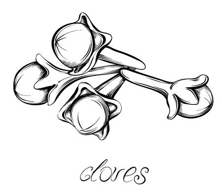 clove: Kitchen spices. Clove. Hand drawn vector illustration.