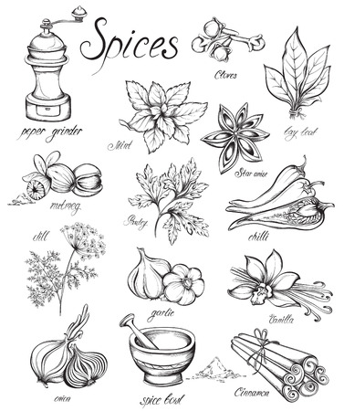pepper grinder: Set kitchen herbs and spices. Hand drawn vector illustration