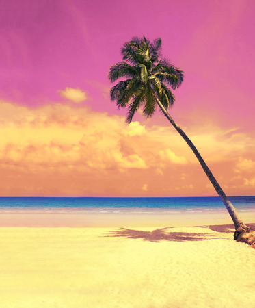 beach paradise: Paradise nature, palm tree over white sand beach on the tropical beach. Summer travel background with retro vintage filter.