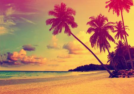 noix de coco: Belle plage tropicale avec des silhouettes de palmiers au coucher du soleil