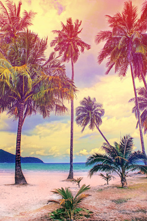 summer nature: Paradise nature, palm tree on the tropical beach. Summer travel background with retro vintage filter.