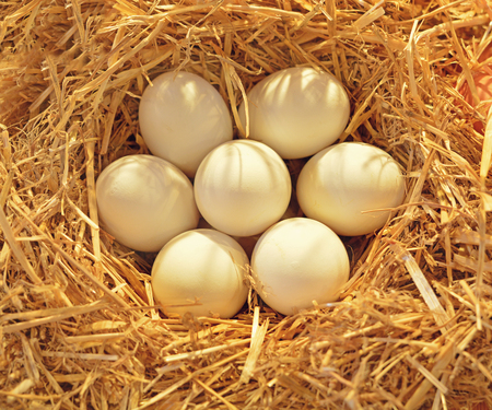 white eggs: Fresh eggs on straw on display at a farmers market
