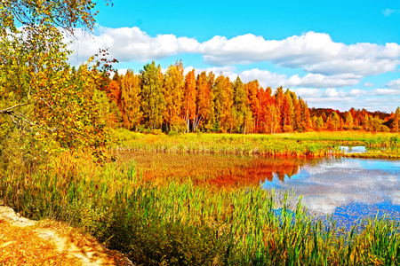autumn landscape: Autumn landscape, trees with colorful leaves over lake