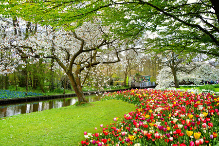 Keukenhof royal park of flowers and tulips in the Netherlands. Beautiful outdoor scenery in Holland
