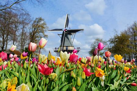 Holländische Windmühle und bunte Tulpen im Frühjahr Blumengarten Keukenhof, Holland, Niederlande Standard-Bild