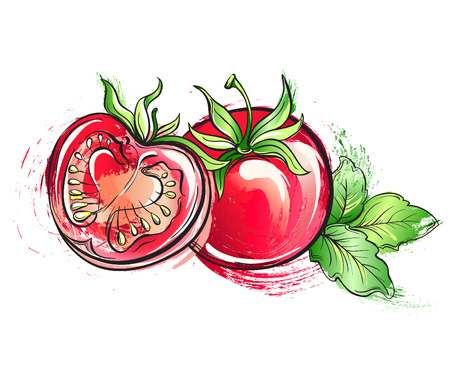 Hand drawn watercolor painting tomato. Vector illustration grunge of vegetables on white background