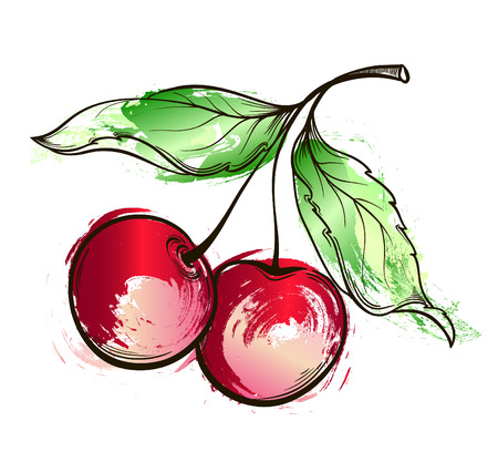 Hand drawn watercolor grunge painting Cherry. Vector illustration of berry on white background
