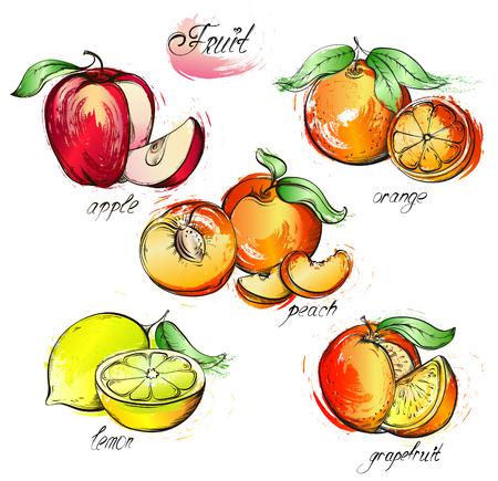Hand drawn watercolor painting set of fruits. Vector illustration apple, lemon, grapefruit, orange and peach on white background Illustration