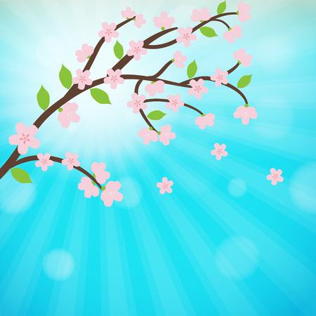 Cherry blossom, sakura branch with  flowers. 向量圖像