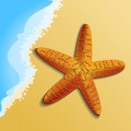seafish: Orange starfish on the beach is highly detailed