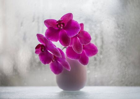 Beautiful pink Orchid in a vase on the background of the window closeup. Orchid flower. Exotic pink flower with bokeh from rain drops on the glass. Greeting card or postcard. Reklamní fotografie