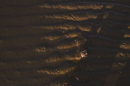 Footprints in the sand from hermit crab after a storm. Sea and sand beeg at sunset. Sunlight and promenade. Free space for text