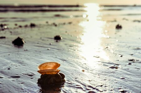 Sunset on the beach. Tinted photo in golden highlights. Sea and sandy beach with many shells in the sand. Free space for text