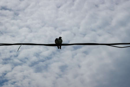 Two swallows love birds sitting on a wire. Banque d'images