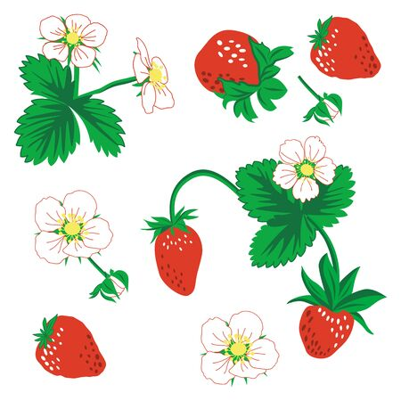 Seamless pattern of berries, leaves and strawberry flowers. vector illustration. Strawberry vector pattern background. Set flower, petal, strawberry. Ilustração