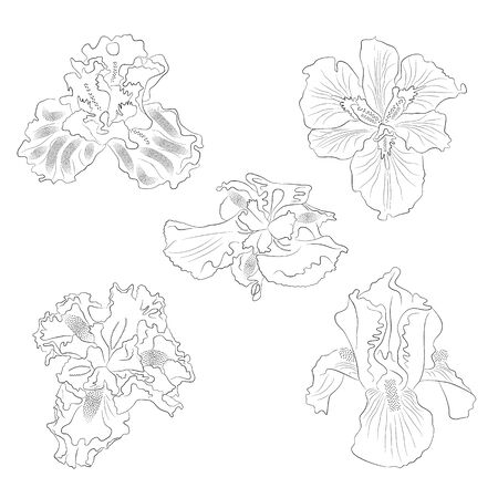 Set of vector irises, floral botanical flower. Buds in black isolated on white background. Irises illustration element in line art style. Use for postcards, banners, design, textile, print, posters.