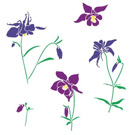 Violet and pink flower of aquilegia, columbine illustration in flat style, isolated on white background. Can be used for summer design, pattern, greeting card, wedding invite, cosmetic template. Vectores