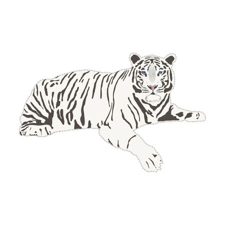 White Bengali tiger full body isolate on white background, vector illustration in flat style. A calm tiger is resting. Can be used for print, promotional materials, web and app.