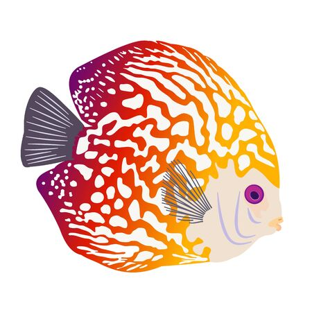 Discus Fish or Pompadour Fish isolated on white background. Ocean, sea, aquarium. Leopard, little, tropical, bright, exotic fish. Colored Vector illustration. Purple, red, yellow gradient.