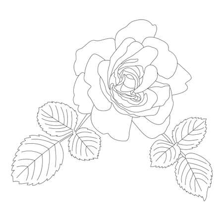 Outline contour of a beautiful rose with two leaves. Hand-drawn vector illustration, line art. Black and white drawing, fashionable silhouette of a flower. For textiles, fabric printing, crafting, web