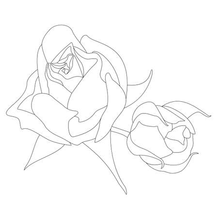 Contour of two unblown rosebuds. Beautiful rose. Vector graphics, line art, single line designs. Silhouette of black and white flower arrangement. Design element for romantic illustrations, coloring.