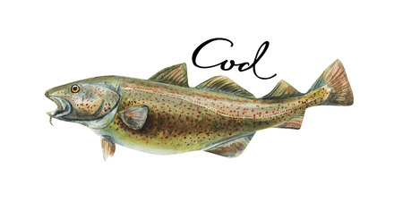 Cod fish whole isolated on a white background Stock Photo