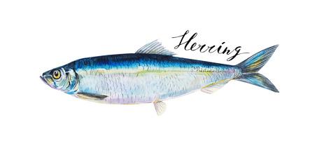 Haring vissen geheel geïsoleerd op een witte achtergrond