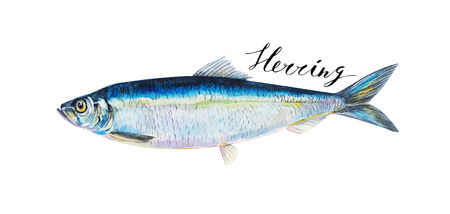 Herring fish whole isolated on a white background